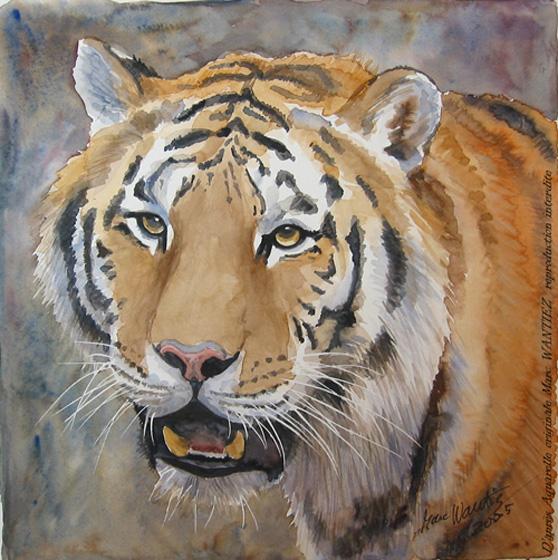 La tete de tigre - Image tete de tigre ...