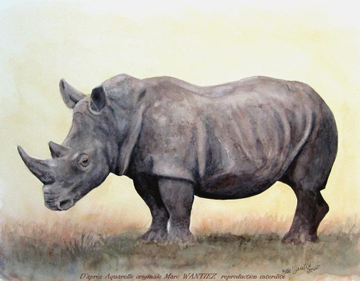 Le Rhinoceros